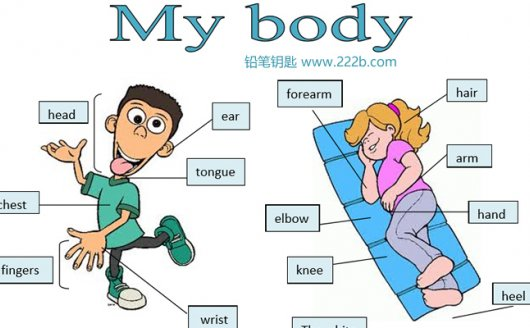 《20份body parts身体部位词汇专项作业纸》语法练习原版PDF 百度云网盘下载